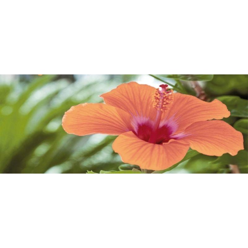 df3e32ca1 CERROL Imperia Flora Centro - Декор керамический настенный, цветы, 20x50 см  508599